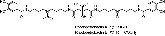 Structure of Rhodopetrobactins